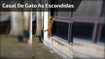 Casal De Gatos Se Encontrando As Escondidas, Que Flagra Foi Esse!