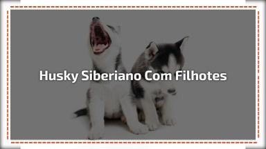 Casal De Husky Siberiano Tirando Um Cochilo Com Seus Filhotes, Que Lindos!