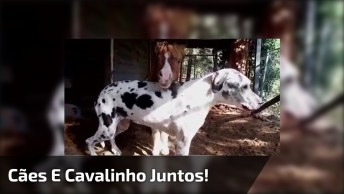 Cavalinho É Quase Do Tamanho Dos Cachorros, Confira Que Família Linda!