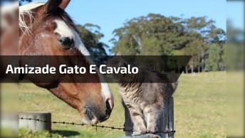Cavalo Amigo De Gato, Essa Amizade É Inusitada E. . . Linda!