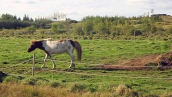 Cavalo Brincando Na Terra, Quem Disse Que Eles Não Podem Fazer Bagunça!