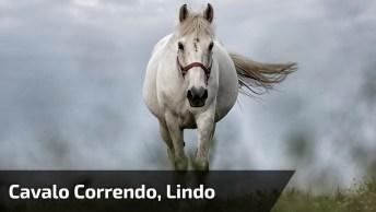 Cavalo Correndo, Veja Que Força, Que Rapidez, Lindo Cavalo!