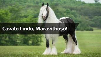 Cavalo Lindo, Olha Só Esta Crina Simplesmente Maravilhoso!