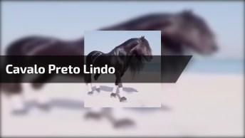Cavalo Mais Bonito Do Mundo, Compartilhe Com Quem Ama Cavalos!