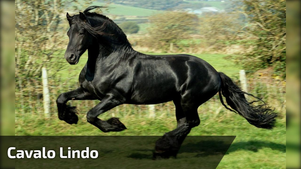 Cavalo Mais Lindo Que Você Já Viu Olha Só O Brilho De Seu Pelo