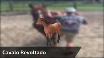 Cavalo Não Quer Saber De Ninguém Montando Nele Não Hahaha!