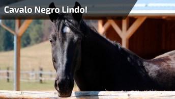 Cavalo Negro Lindo! Olha Só O Porte Deste Incrível Animal!