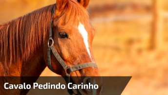 Cavalo Pedindo Carinho, Veja Que Cena Incrível, Confira!