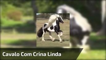 Cavalo Preto Mesclado Com Branco E Crina Maravilhosa, Que Espetáculo!