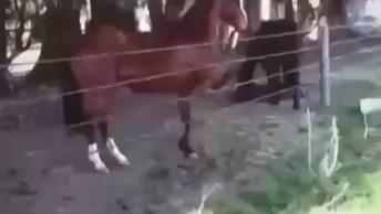 Cavalo Pula Cerca De Maneira Fácil E Simples, Que Inteligente!