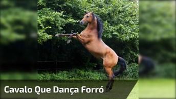 Cavalo Que Dança Forró, Esse É Bom No Que Faz Hein, Confira!