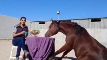 Cavalo Sentado A Mesa, Se Alimentando Como Um Ser Humano Hahaha!