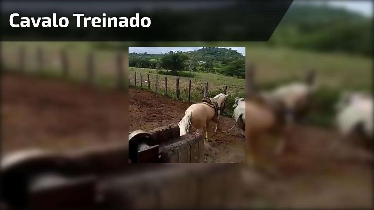 Cavalo treinado