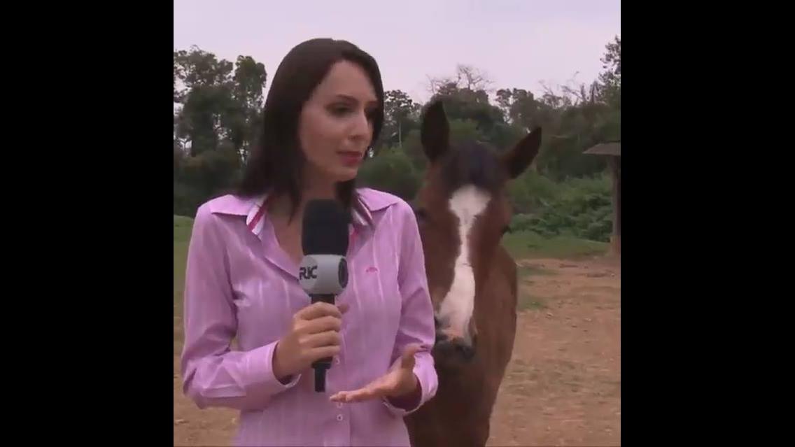 Cavalos atrapalham entrevista de repórter