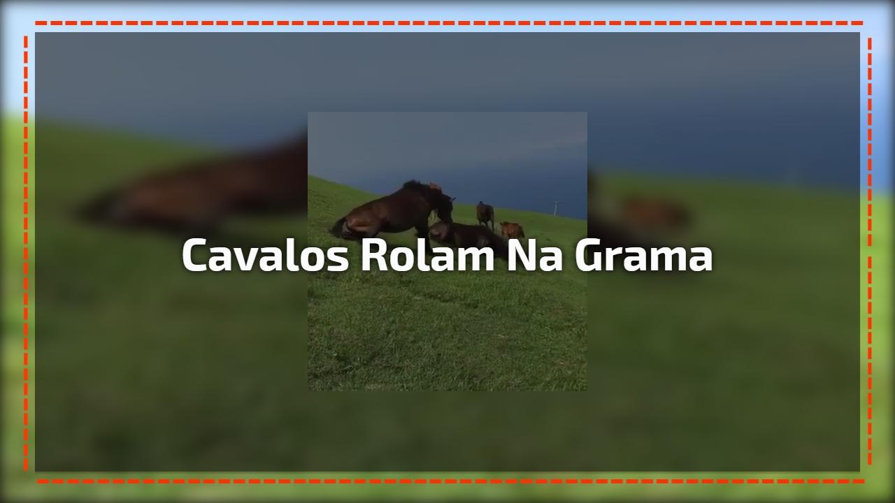 Cavalos rolam na grama