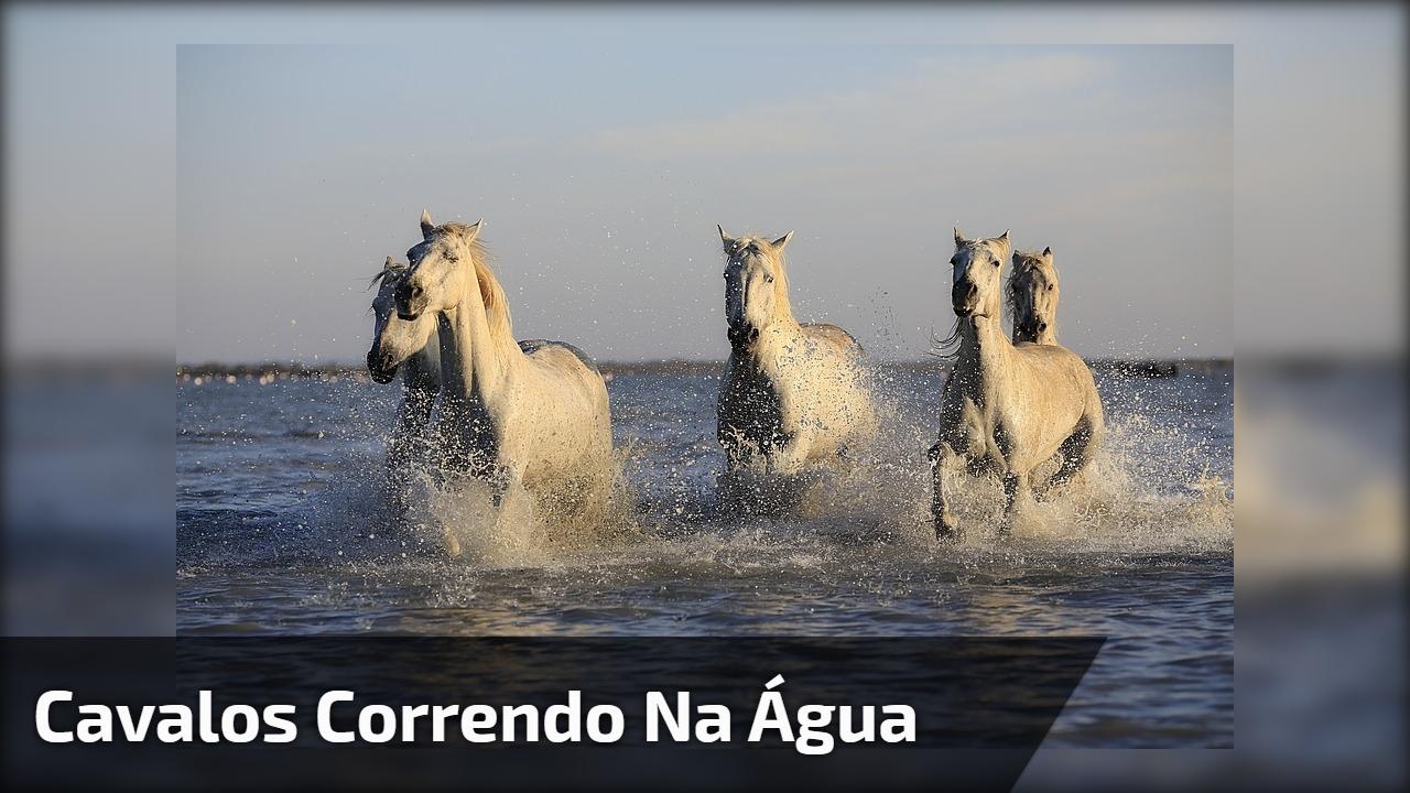 Cavalos correndo na água