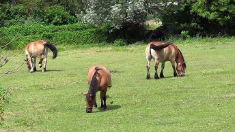 Cavalos Lindos No Campo, Para Quem É Fã Deste Animal, Da Só Uma Olhada!