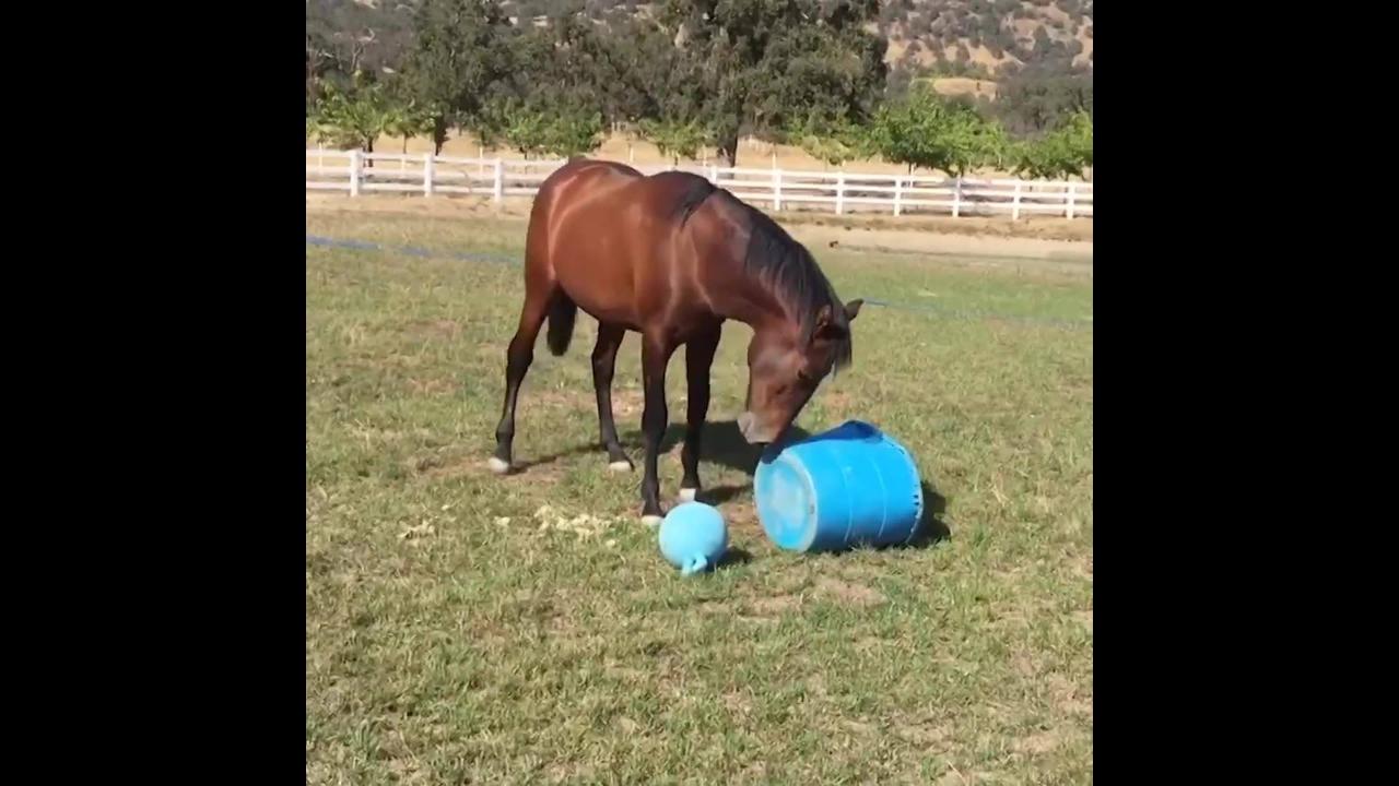 Cavalos os animais mais engraçados que você já viu
