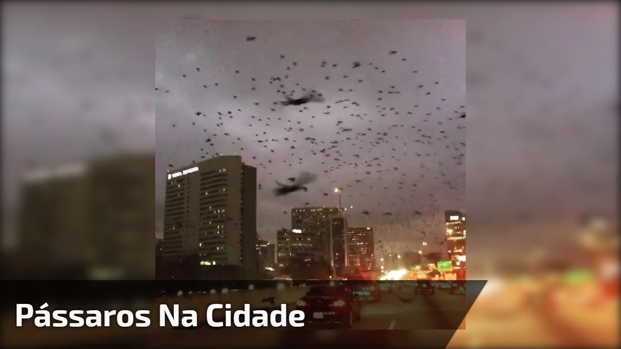 Pássaros na cidade