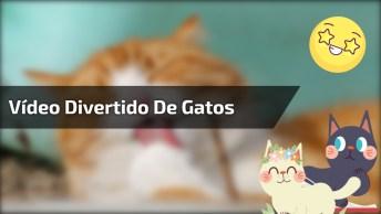 Cenas Com Montagens Engraçadas De Gatos, Você Vai Dar Muitas Risadas!