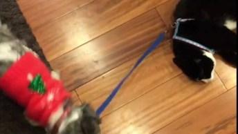 Cenas Da Incrível Rivalidade Entre Gatos E Cachorros, Até Quando Isso Vai?