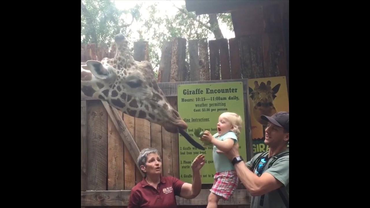 Cenas engraçadas que acontecem entre os homens e os animais