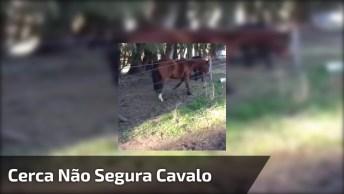 Cerca Para Cavalos Já Não Adianta Mais, Veja O Que Esse Cavalo Do Vídeo Faz!