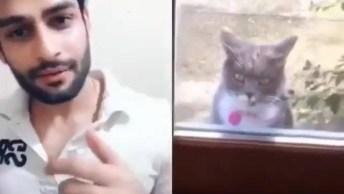 Chamando O Gato Para Dançar, E Não É Que Ele Entrou Nessa?
