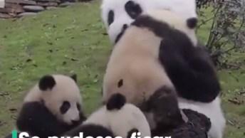 China Contrata Pessoas Para Fazerem Companhia Para Os Pandas!