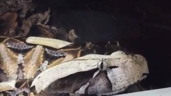 Cobra Abrindo A Boca, Como Não Ter Medo De Um Animal Desse?
