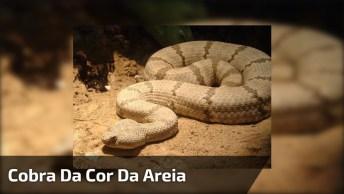 Cobra Da Cor Da Areia Que Se Esconde, Dá Até Um Arrepio De Imaginar. . .
