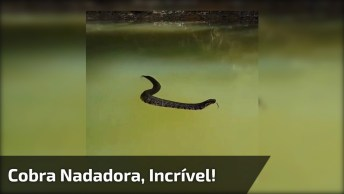 Cobra Nadadora, O Que Você Faria Se Encontrasse Com Uma Dessa?
