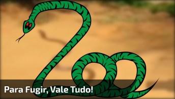 Cobra Regurgitando Os Ovos Para Poder Fugir Mais Rápido, Confira!