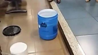 Cobra Sendo Resgatada Dentro De Um Banco, Como Ela Foi Parar Lá É Um Mistério!