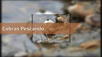 Cobras Pescando Em Uma Queda D'Água De Um Rio, A Luta Pela Sobrevivência!