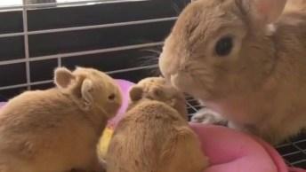 Coelhinha Com Seus Filhotinhos, Que Coisinhas Mais Fofinhas!