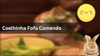 Coelhinha Fofa Comendo Folhinhas, Como Os Coelhos São Lindinhos!