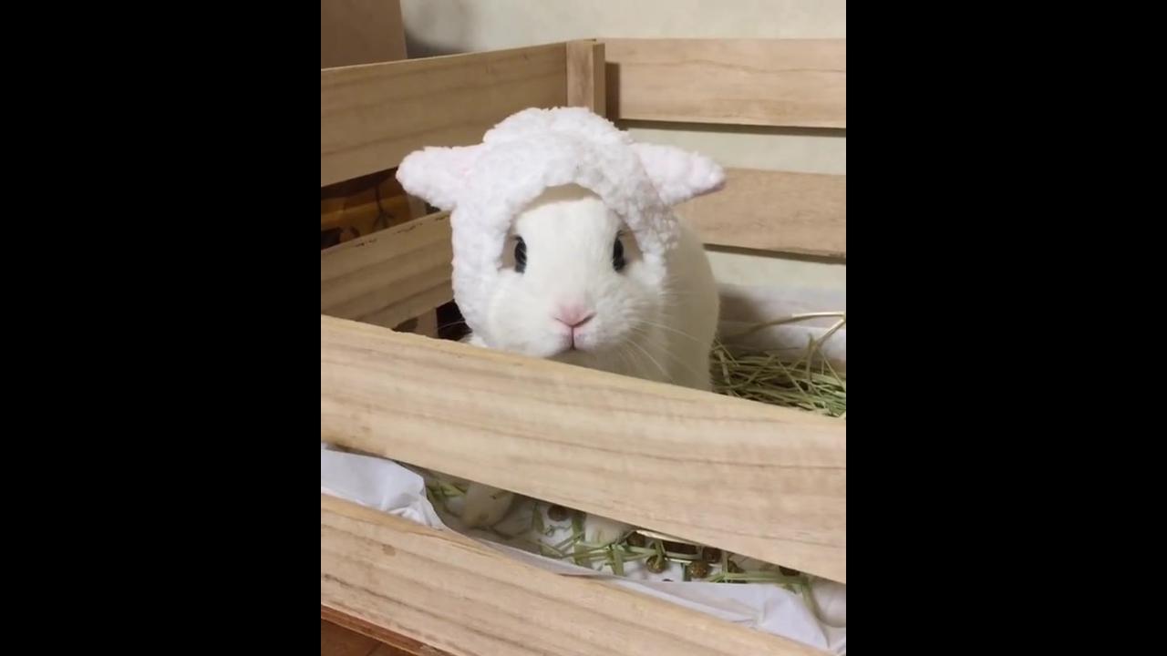 Coelhinho com toquinha de ovelhinha