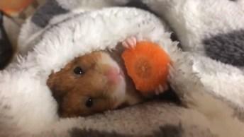 Coelhinho Comendo Cenoura Deitado Embaixo Das Cobertas, Que Folga!