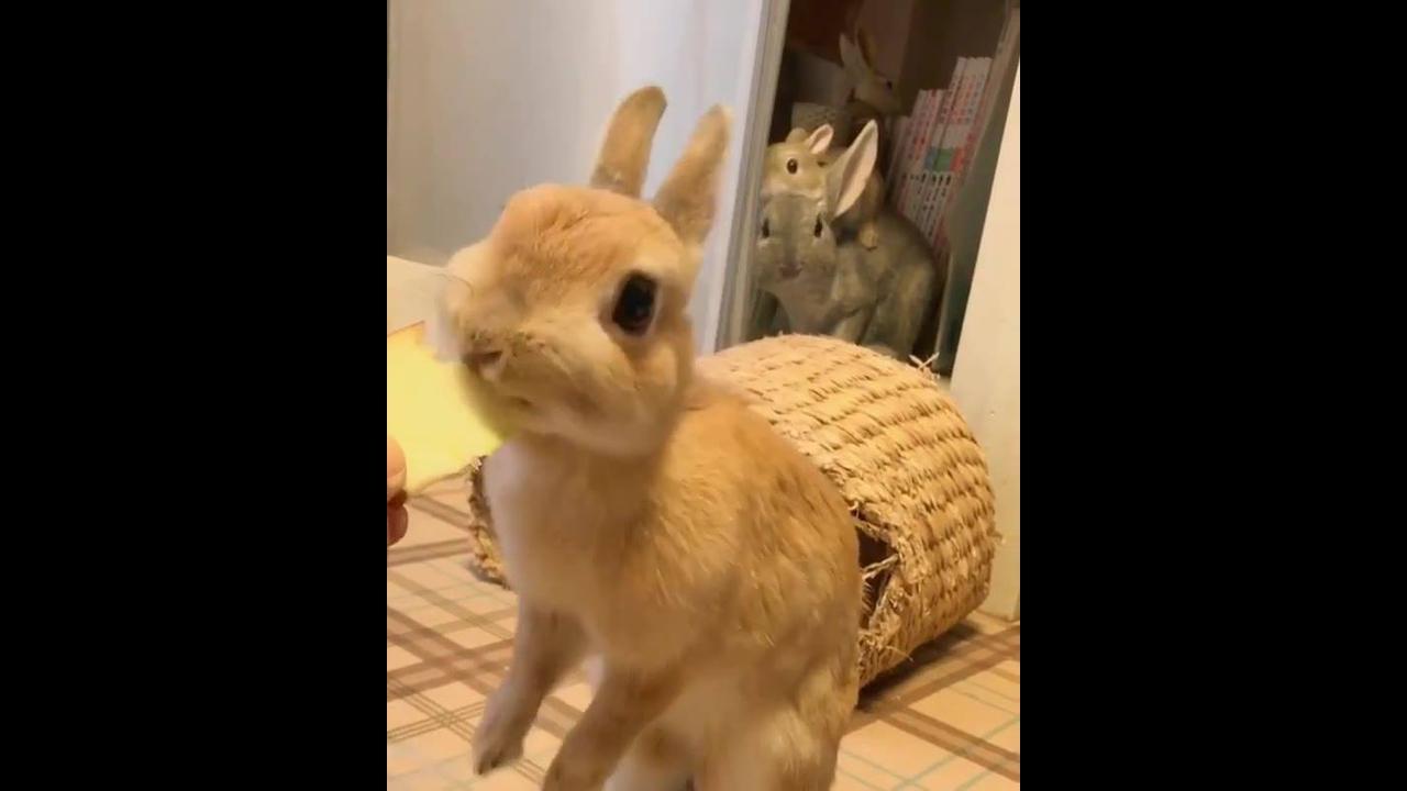 Coelhinho comendo maçã