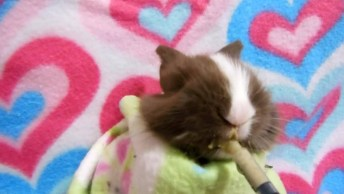 Coelhinho Comendo Na Seringa, Veja Como Ele Gosta De Comer!