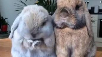 Coelhinhos Com Narizinho Mais Fofinho Que Você Vai Ver Hoje, Que Lindinhos!