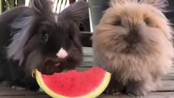 Coelhinhos Comendo Melancia, Olha Estas Boquinhas Lindas Que Não Param De Mexer!