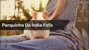 Coelhinhos Da Índia Comendo Melancia, Veja Como São Fofinhos!