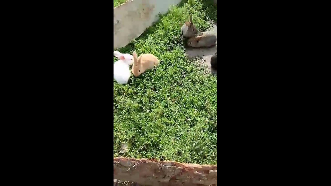 Coelhinhos fofinhos comendo mato