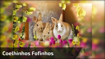 Coelhinhos Fofinhos No Quintal, Olha Só A Quantidade De Animais!