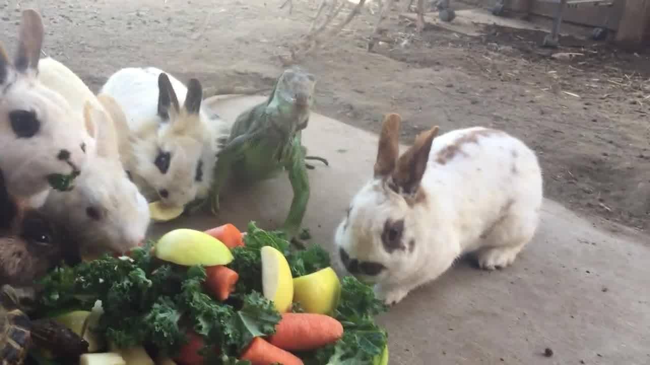 Coelhinhos na hora do almoço