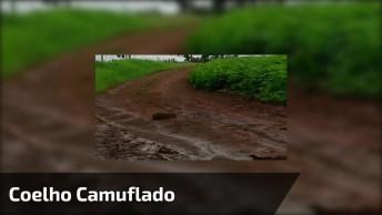 Coelho Se Camuflando Na Terra Dos Cães, Veja Como É Esperto!