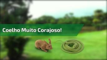 Coelho Versus Cobra! O Que Sera Estava Passando Na Cabeça Deste Coelho!