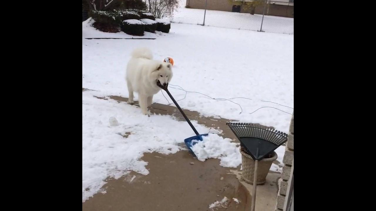 Coisas engraçadas que os cachorros fazem na neve